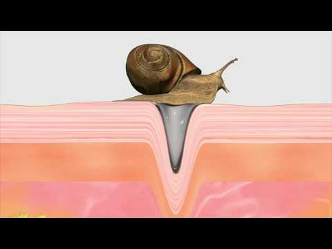 Snail Mucus: Cosmetic Industry's latest fad?