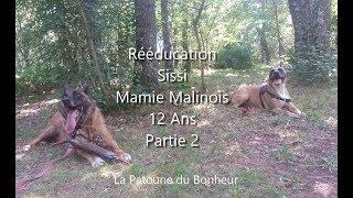 REEDUCATION CHIENNE MALINOIS 12 ANS / GESTION DE FRUSTRATION ET DE SUR-EXCITATION (PARTIE 2)