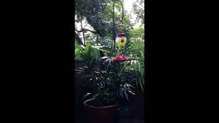 Be a Hummingbird