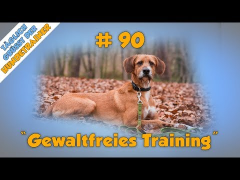 TGH 90 : Gewaltfreies Hundetraining - Hundeschule Stadtfelle - Hundeerziehung