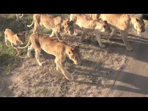 Our amazing Kenya-trip