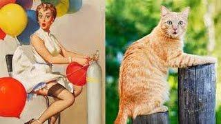 Смешные картинки про кошек и котят Выпуск №40  FUNNY CATS СМЕШНЫЕ КОШКИ