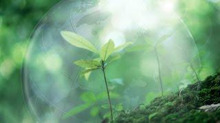 Проект экология почвы
