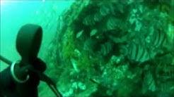 Corsair Plane Wreck Scuba Dive Jacksonville
