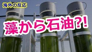 【海外の反応】世界を救う?!福島の藻から石油を生産