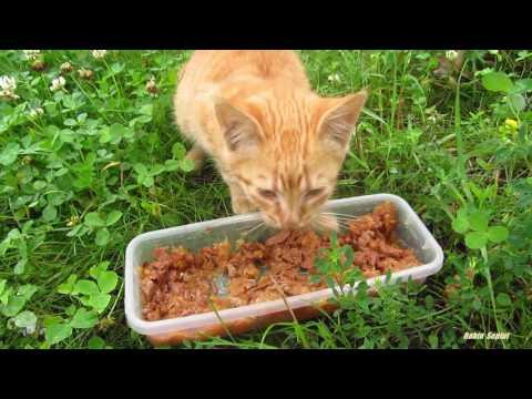 Ginger kitten meow on the grass