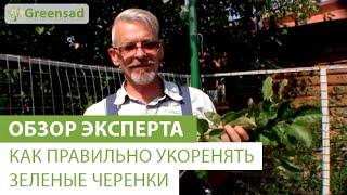Как правильно укоренять зеленые черенки(В этом видео наш эксперт расскажет как правильно укоренять зеленые черенки. Отличные плодовые деревья,..., 2014-10-01T07:34:20.000Z)