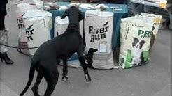 Argyle & Master Made Feed Store Dog Food Day
