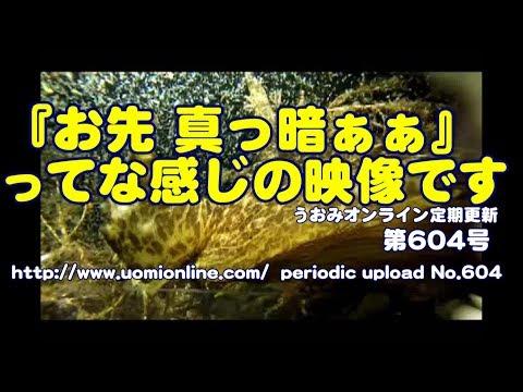 目の前が暗くなる感じの動画【水中動画の定期更新No.604】
