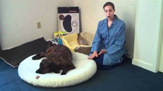 Selecting An Orthopedic Pet Bed