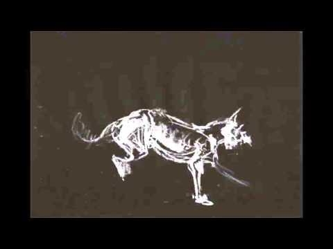White Cliffs - Britton/O'Mahoney