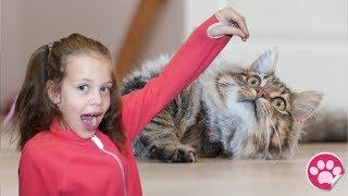 Поход в Cat Cafe, играем с кошками 🐱🐱🐱