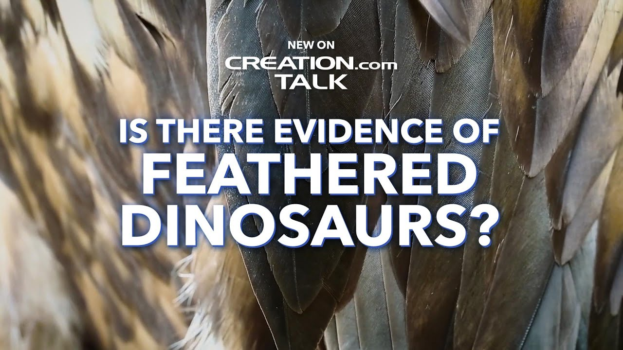 Is There Evidence of Feathered Dinosaurs?