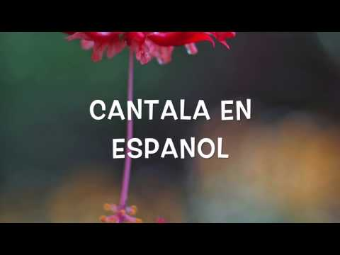 "We Are Messengers   ""Magnify"" Español"