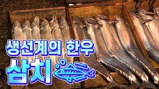 [어영차바다야] 생선계의 한우, 삼치
