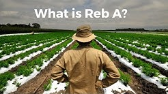 What is Reb A ?