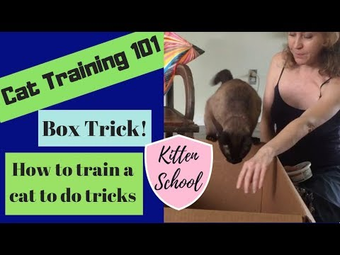 How to Teach your Cat a Trick - Super Easy and FUN