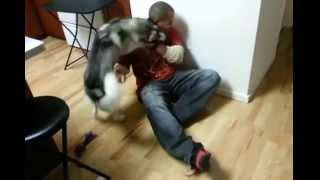 Siberian Husky And Soldier Dad Reunited
