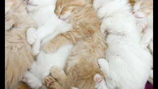 Подборка приколов #3.Кошки спят