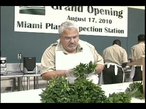 MIAMI PLANT INSPECTION STATION
