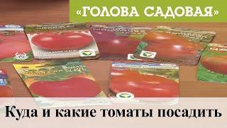 Голова садовая - Куда и какие томаты посадить