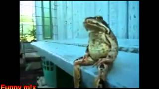 Cười vỡ bụng khi động vật bắt chước con người