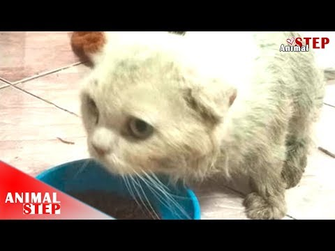 Persian Cat Lives In The Garbage for Months Getting Rescued and Adopted
