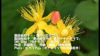 西田佐知子・・傷ついた花びら 西田佐知子「愛のささやき 星のナイトク...