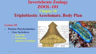 Platyhelminthes élőhely turbellaria