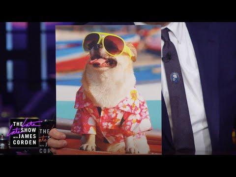 Dogs In Sunglasses