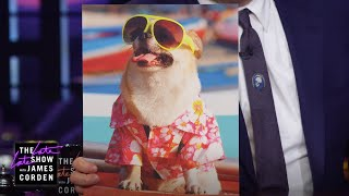Dogs In Sunglasses