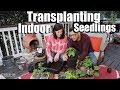 Download Transplanting Indoor Seedlings - 2 Simple Clues // Spring Garden Series #3