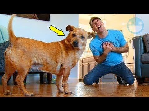 5 Animales Reaccionando al ver a su Dueño Fingir su Muerte (La #3 te matará de la risa)