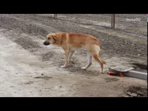 Rescuers post to jerk who abandoned their dog on dirt road goes viral