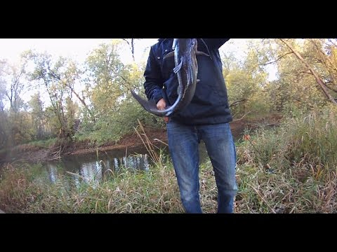 Early Morning Catfishing | Tuscarawas River | Contour ROAM