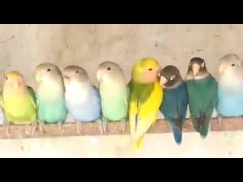 Exotic Birds,Macaws Birds,Cockatoo,Gouldian Finches,Pet Birds for Sale