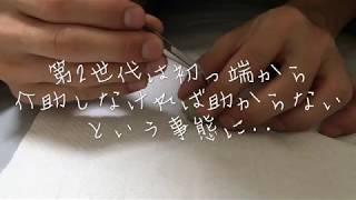 姫ウズラ  第2世代  生後100日目 祝♪ 色々あった第2世代(°▽°) thumbnail