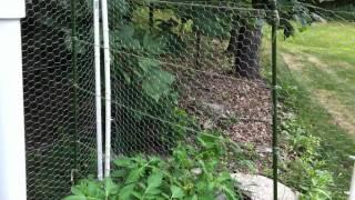 Growing Cucumbers On A Trellis - Easy Method