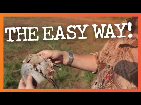 How to Clean Doves the Easy Way - No Plucking!