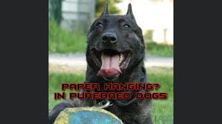 Mixed breeding in purebred dogs. How people do it.
