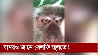 মোবাইল পেয়ে নিজের সেলফি তুললো বানর! | Monkey Selfie | Somoy TV