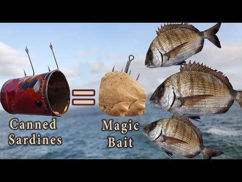 How To Make Magic Bait (Less Than 1$) With Canned Sardines - #Catch-More-Fish