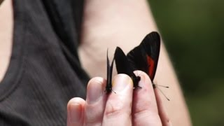 Catching Butterflies in Ecuador!!!