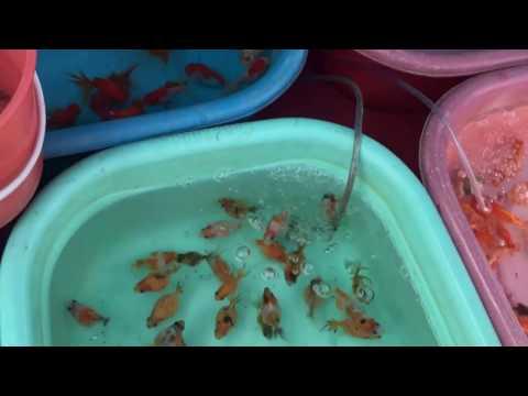 Aquarium fish market Thailand