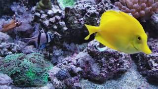 Video 220 Reef tank update download MP3, 3GP, MP4, WEBM, AVI, FLV Oktober 2018