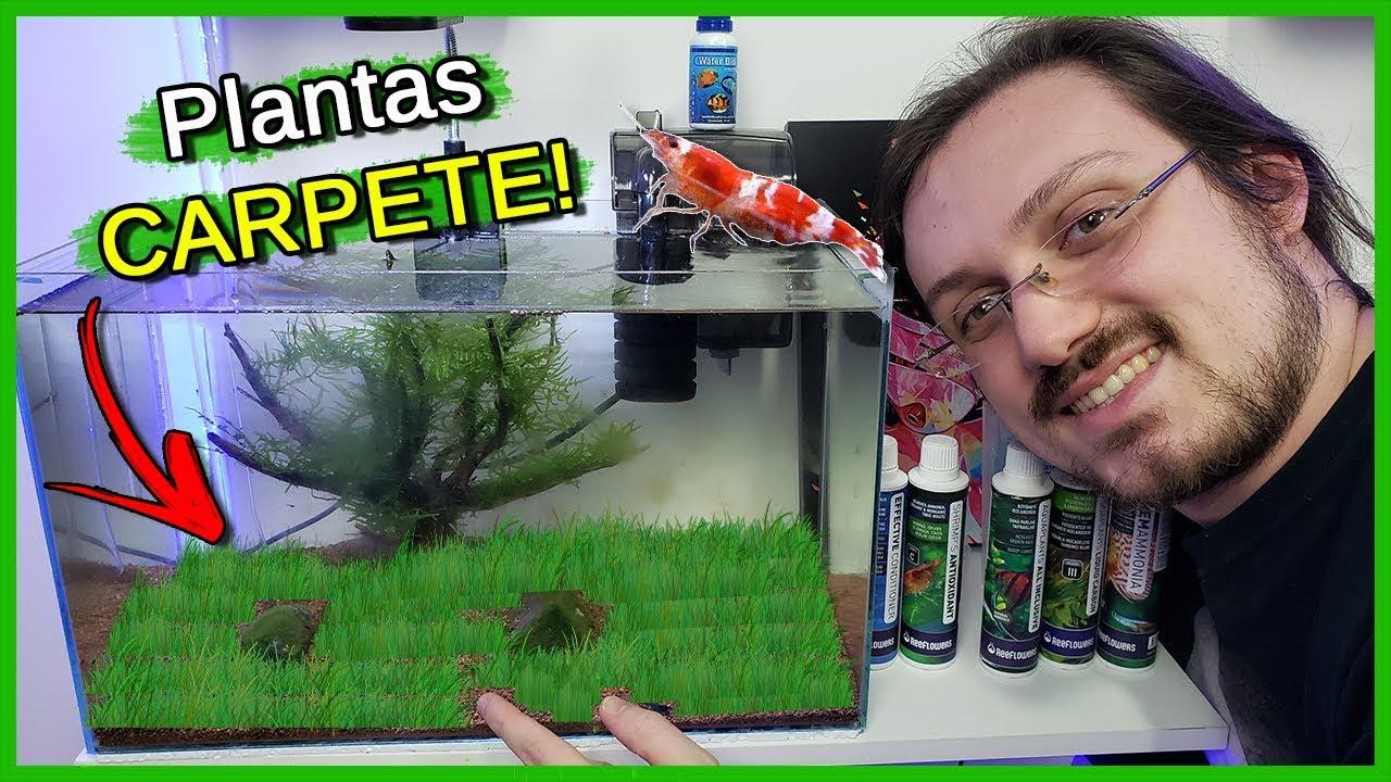 Coloquei plantas CARPETE no Aquário de CAMARÕES!