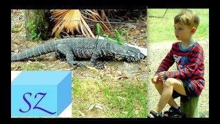 Что делает Крокодил 🌵  в лагере или Варан пришел покушать?!