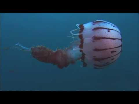 Jellyfish Rule - Nature Of Things