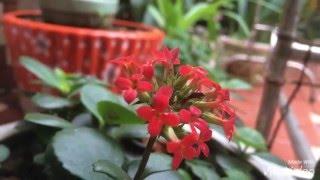 Hoa trong vườn nhà tôi