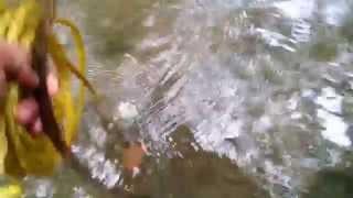 Third Magnet Fishing Round at Horseshoe Creek